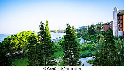 tropikalny, dosadzenie, dłoń drzewa, landscaping