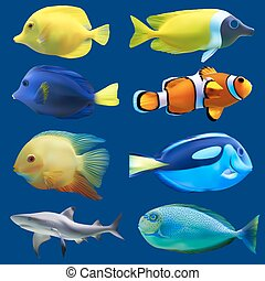 tropikalny, fish., komplet, wektor, ilustracja