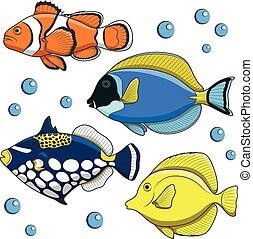 tropikalny, fish., wektor, komplet