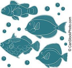 tropikalny, fish., zbiór, rafa