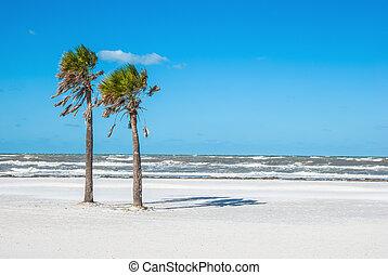 tropikalny, fotografia, plaża, krajobraz
