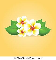 tropikalny, frangipani, kwiat