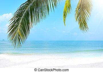 tropikalny, koh chang, plaża.