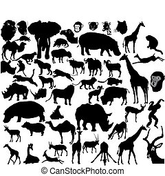 tropikalny, komplet, zwierzęta