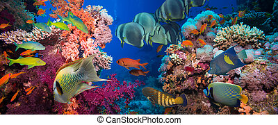 tropikalny, koralikowa rafa, fish