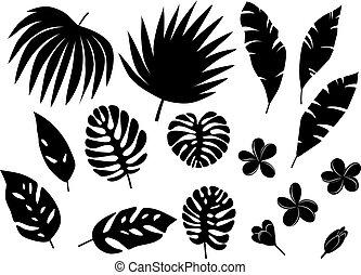 tropikalny, liście, dłoń