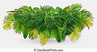 tropikalny, liście, krzak, skład