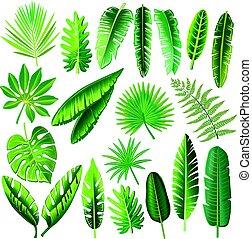 tropikalny, liście, wektor