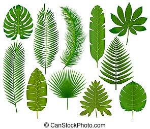 tropikalny, liście, wektor, zbiór, ilustracja
