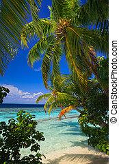 tropikalny, malediwy, raj