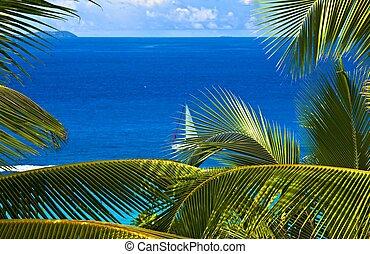 tropikalny, melodia