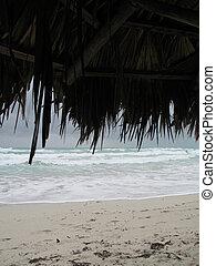 tropikalny, motyw morski