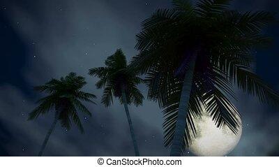 tropikalny, noc, romantyk, (1277), księżyc