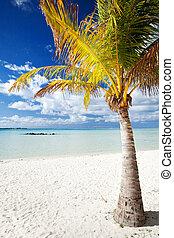 tropikalny, opuszczony, dłoń plaża, drzewo