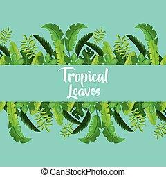 tropikalny, ozdoba, liście