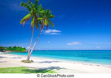 tropikalny, panoramiczny, orzech kokosowy, plaża, dłoń