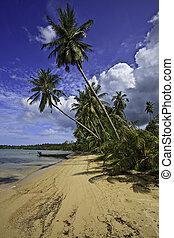 tropikalny, plaża.
