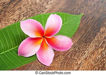 tropikalny, plumeria, z, zielony liść, na, struktura, drewniany stół, dla, zdrój, i, wellness, pojęcie