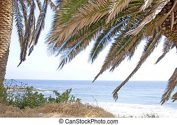 tropikalny, prospekt