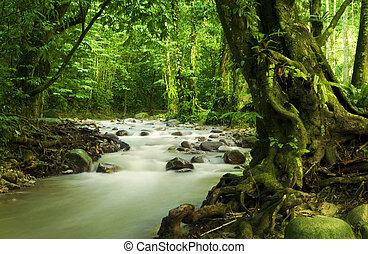 tropikalny, rainforest, i, rzeka