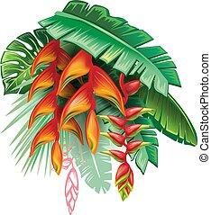 tropikalny, rośliny, heliconia