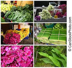 tropikalny, rośliny, i, kwiaty