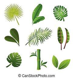 tropikalny, rośliny, set.