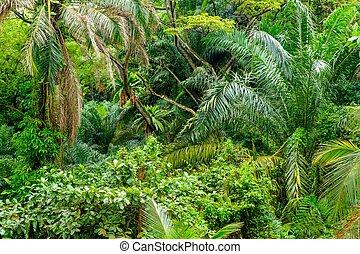 tropikalny, soczysty, zielony, dżungla