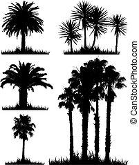 tropikalny, sylwetka, drzewo