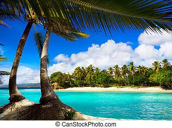 tropikalny, sztuka, karaibskie morze, laguna