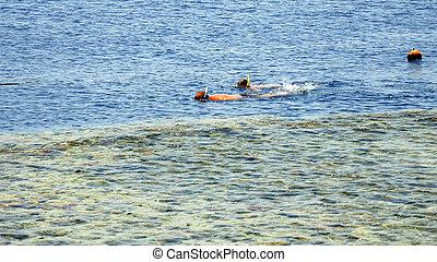 tropikalny, uciekanie się, para, snorkeling, morze