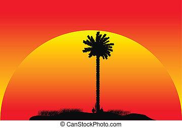 tropikalny, zachód słońca, sylwetka, wyspa