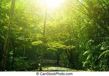 tropikalny, zielony park, prospekt