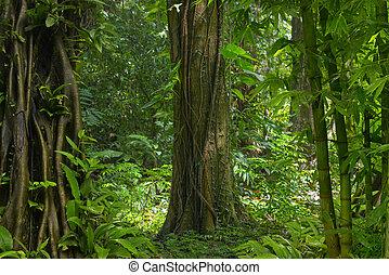 tropikus, ázsiai, rainforest