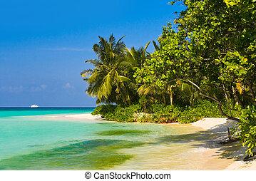 tropikus, dzsungel, és, tengerpart