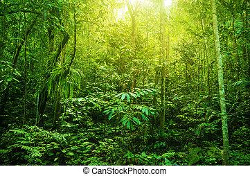 tropikus, fantasztikus, sűrű erdő