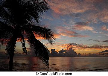 tropikus, felett, napkelte, óceán
