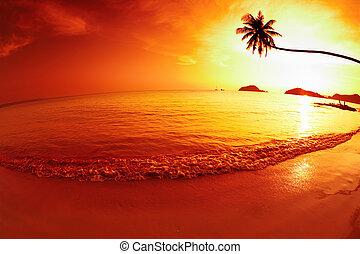 tropikus, képzelet