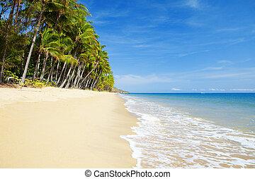 tropikus, lakatlan, tengerpart, pálma fa