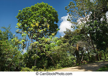 tropikus, liget