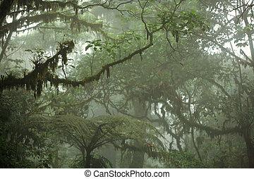 tropikus, mennyezet, erdő, eső