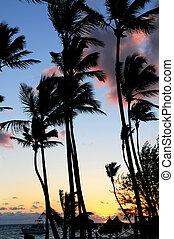 tropikus, napkelte