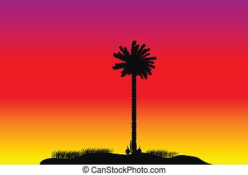 tropikus, napnyugta, árnykép, sziget