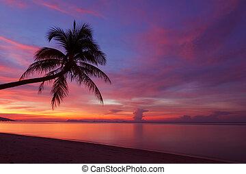 tropikus, napnyugta, noha, pálma, silhoette, -ban, tengerpart