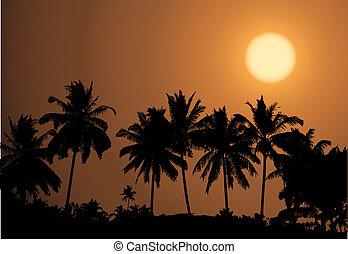tropikus, pálma, napnyugta, silhouet