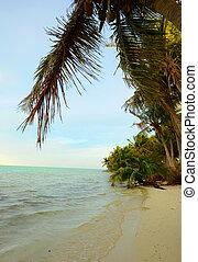 tropikus, pálma tengerpart, bitófák, óceán