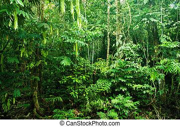 tropikus, sűrű erdő, hihetetlen