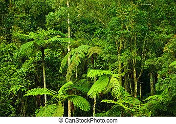 tropikus, sűrű erdő, táj