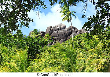 tropikus
