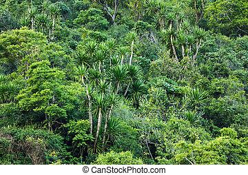 tropikus, tengerpart, erdő